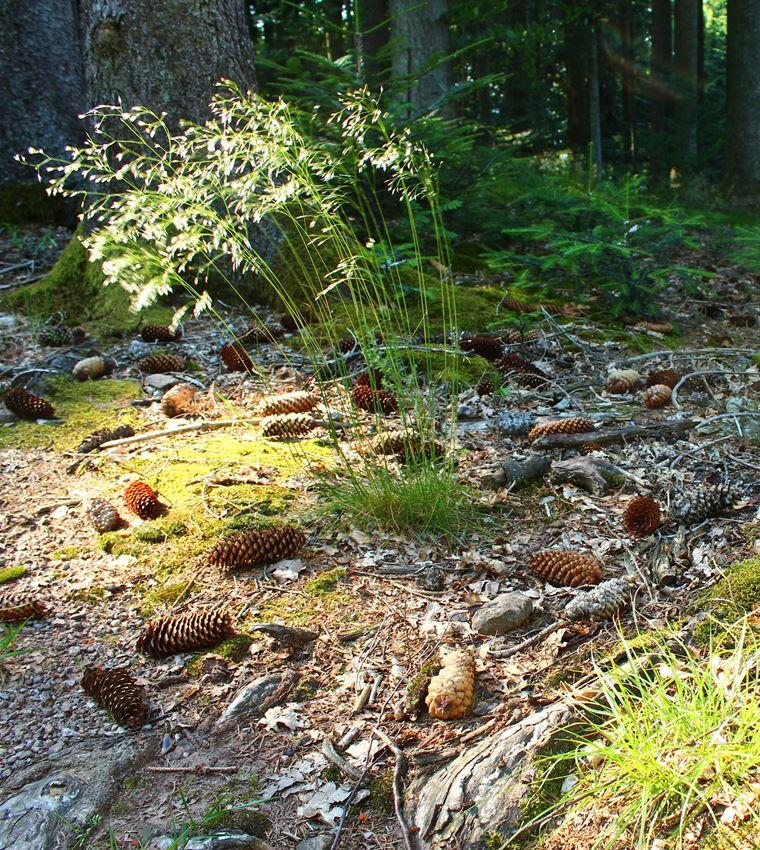 Neues Blog von schwarzwaldlieb