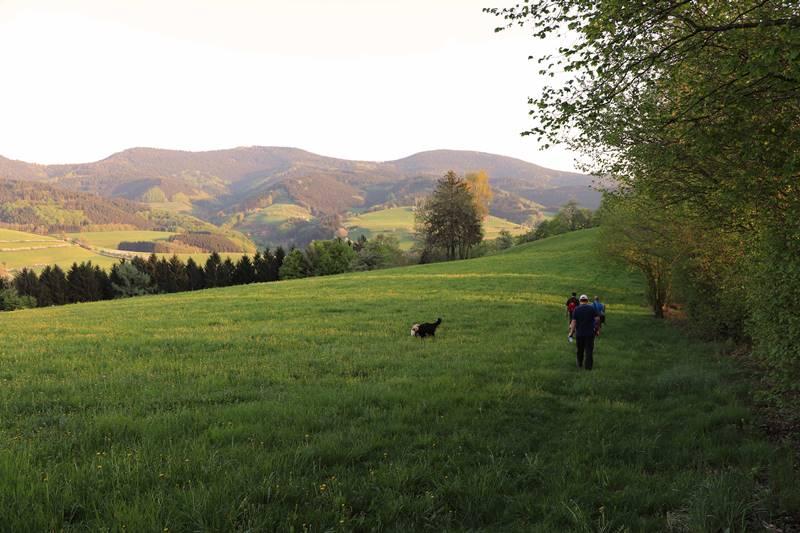 sieben-taeler-weg-oberharmersbach
