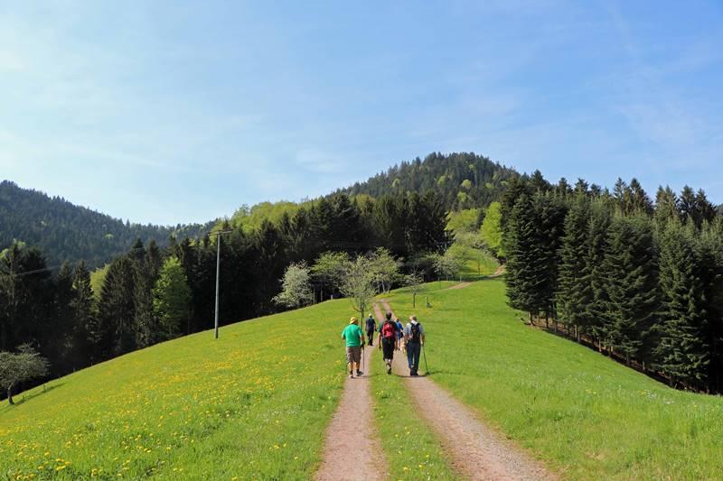 sieben-taelerweg-oberharmersbach-wanderung