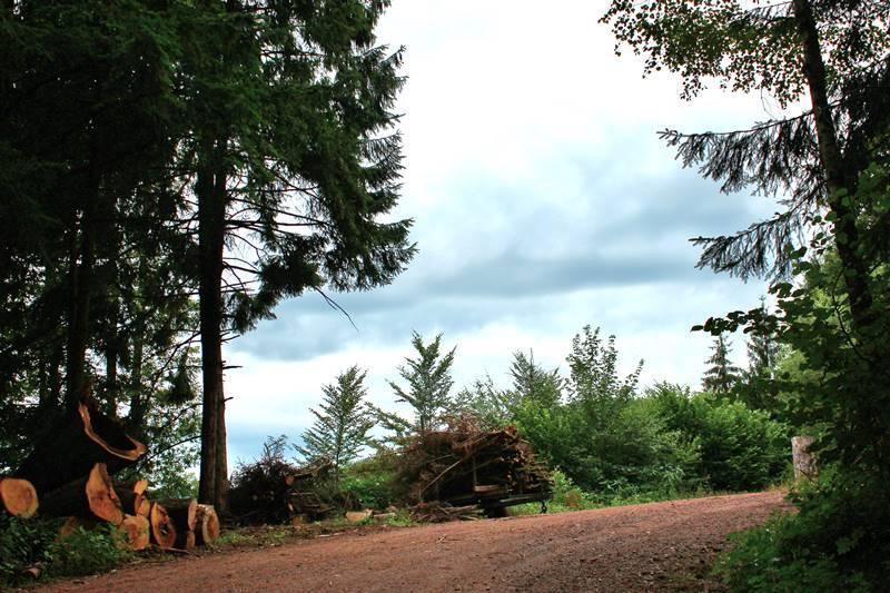 wald-hinterbauer-kreuzweg
