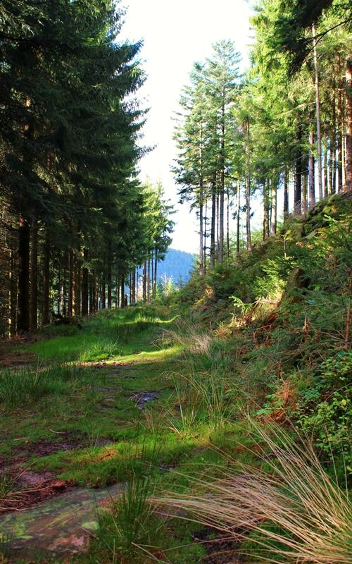 graswanderweg-heidenstein-oberharmersbach