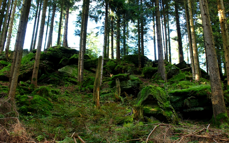heidenstein-wanderung-oberharmersbach-schwarzwald