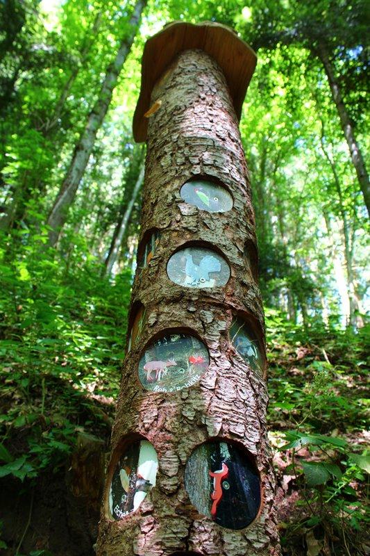 tiere-im-wald-naturerlebnispfad-schwarzwald